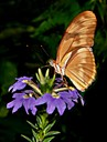 Butterfly on Flower, by Joe Constantino