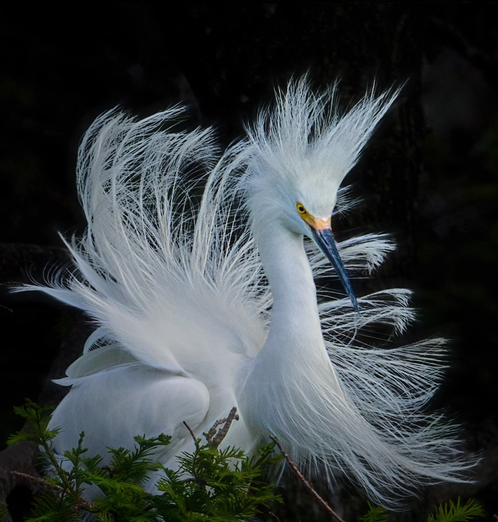 Snowy in the wind, by Cheri Halstead